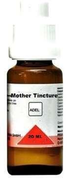 LYCOPODIUM MOTHER TINCTURE Q